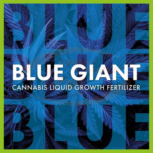 TheAzimut BLUE GIANT