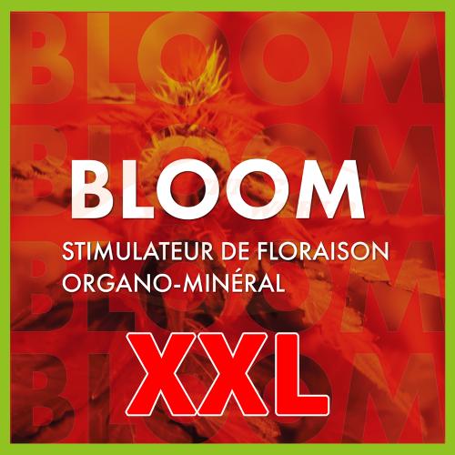 TheAzimut BLOOM - XXL