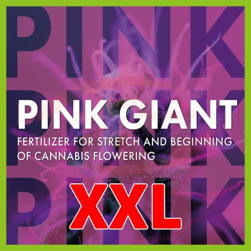 TheAzimut PINK GIANT - XXL